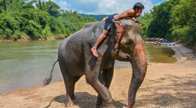 Wangpo Elephant Camp – sloní farma nedaleko Kanchanaburi, Thajsko