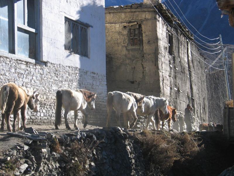 Ve vesničce Jharkot.