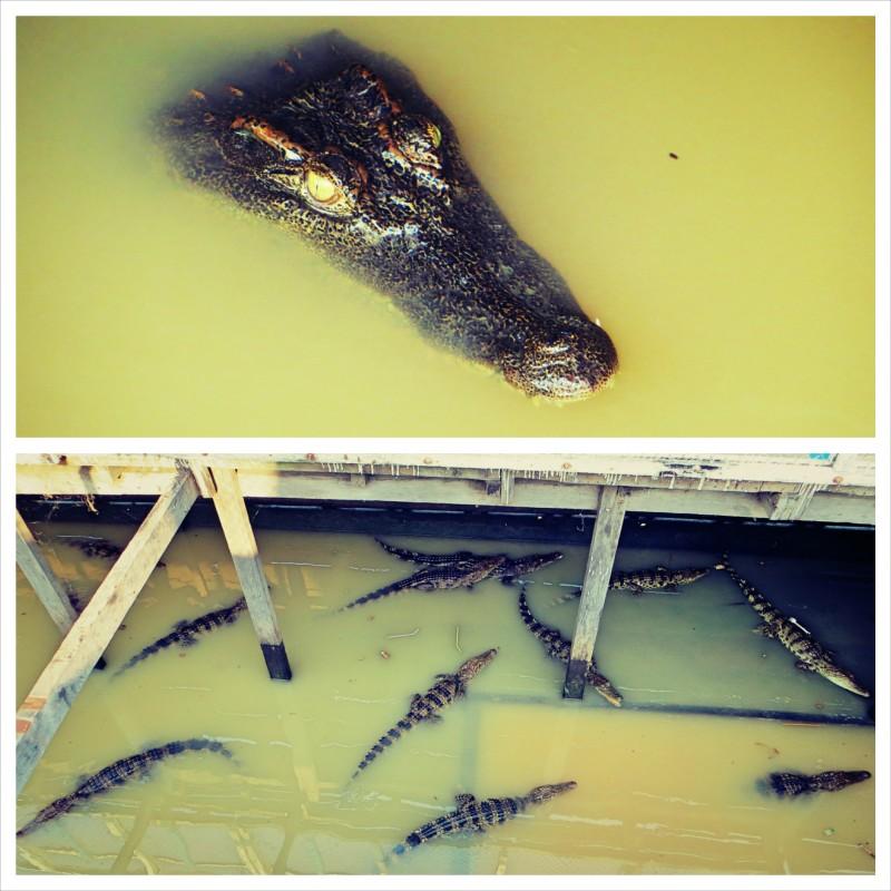 Krokodýli.