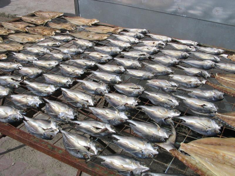 Všudypřítomné sušené ryby.