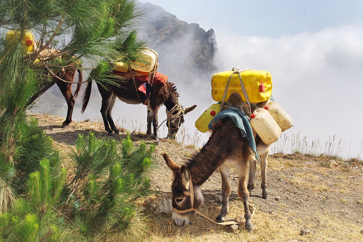 TP_Donkeys-carrying-water-in-Cape-Verde