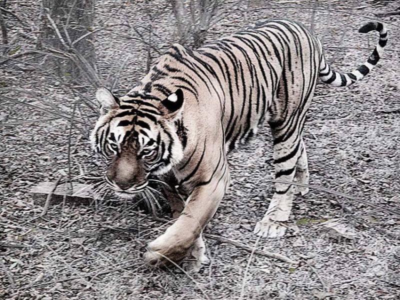 Setkání s tygrem bylo pro Honzu Homolu velkým zážitkem