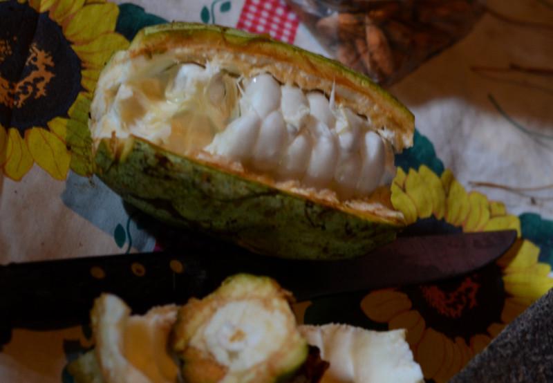 Kakaovník Guatemala
