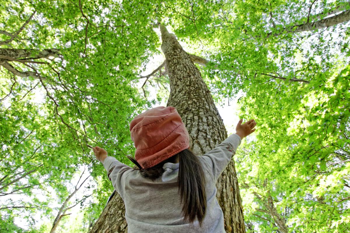 Strom, les, wc, toaleta, příroda