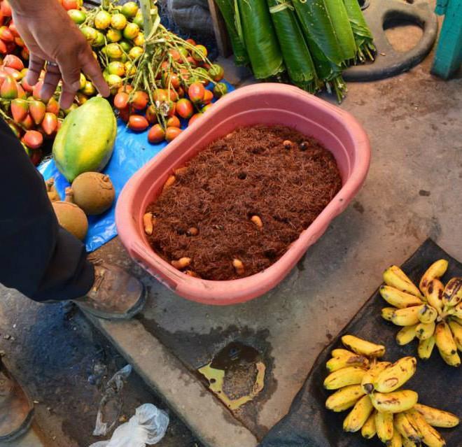 trh Iquitos