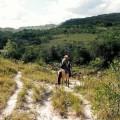 Cesta, kone, priroda