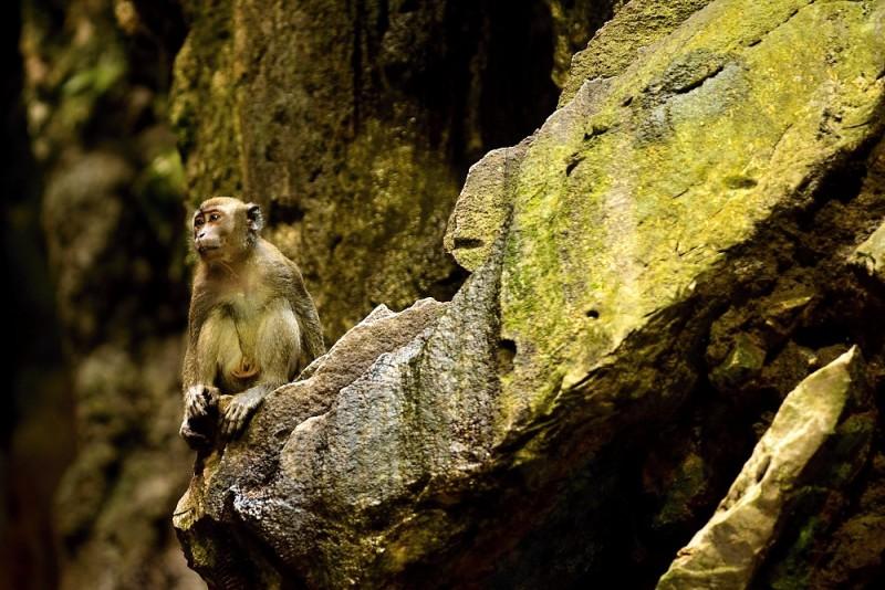 Makak sedící v Batu Caves
