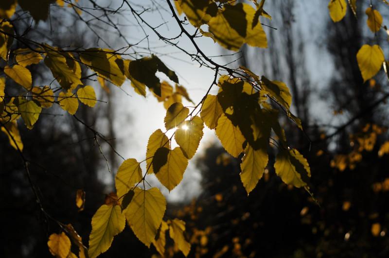 Podzim na Řípu