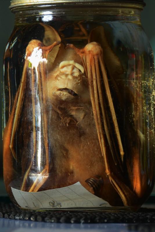 Pavrápenec z Temné jeskyně