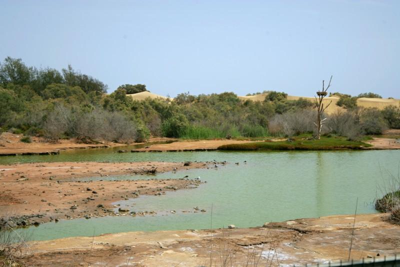 Obrázek Gran Canarie připomínající Africkou krajinu (foto: Martin Nesiba)