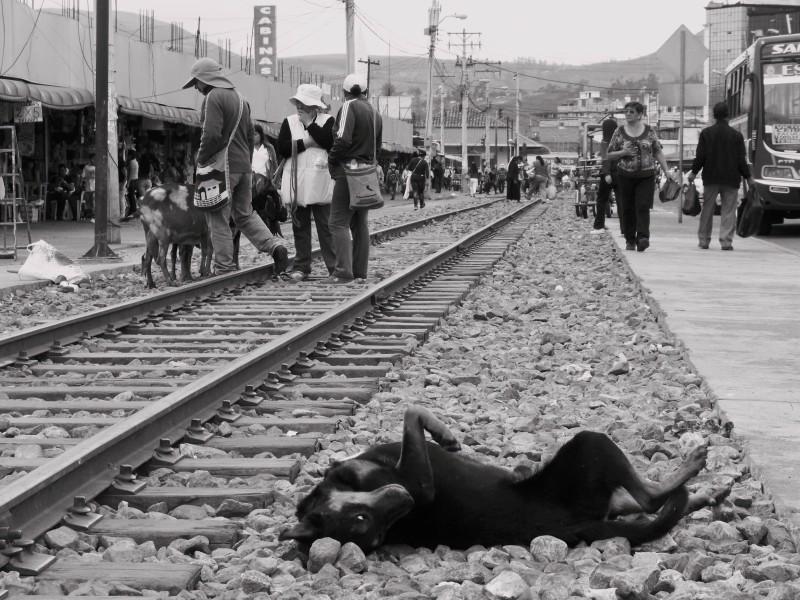 Petrý život před nádrážím. Pes válející se u kolejí. Lidé přecházející přes koleje. Město Ibarra, Ekvádor