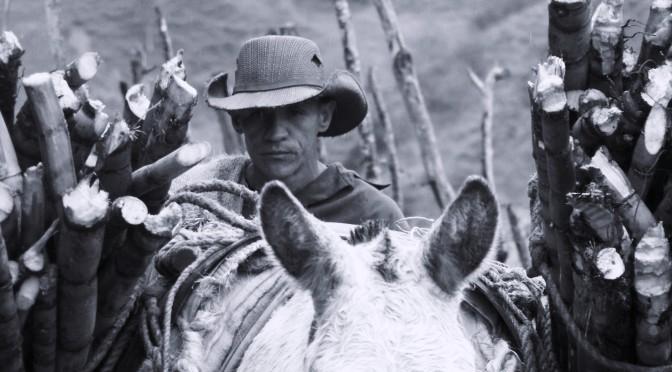Cena cukru aneb Ze života kolumbijských horalů