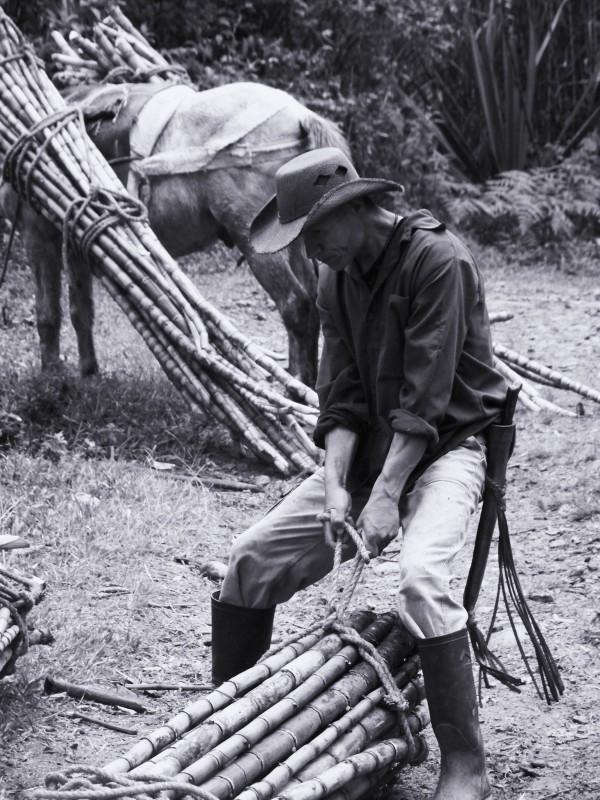 Cena třtinového cukru - horalové v Kolumbii