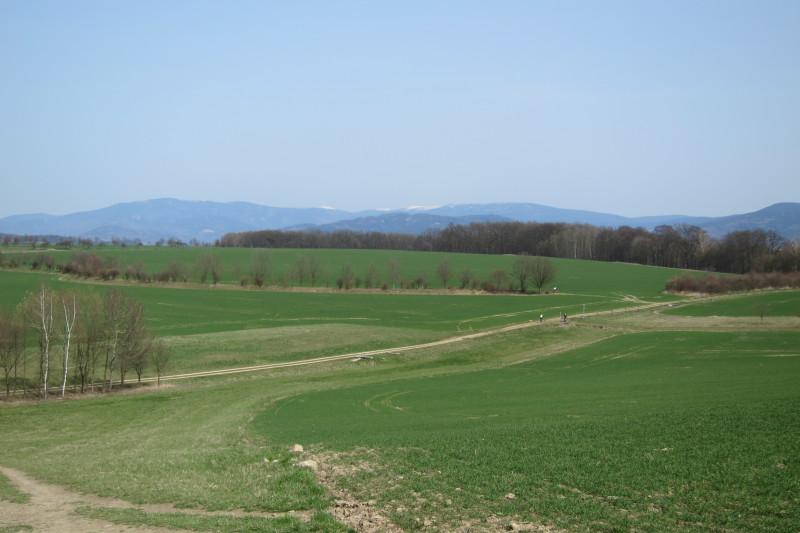 Pohled z rozhledny směrem k Pradědu a okolním vrcholům