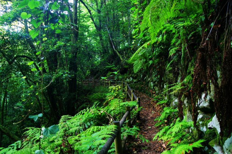 Cesta v pralese