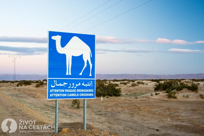 Fotoreport z cesty napříč Tuniskem – U nás srazíte na silnici srnku nebo divočáka, v Tunisku hrozí střet s velbloudem, tak opatrně!