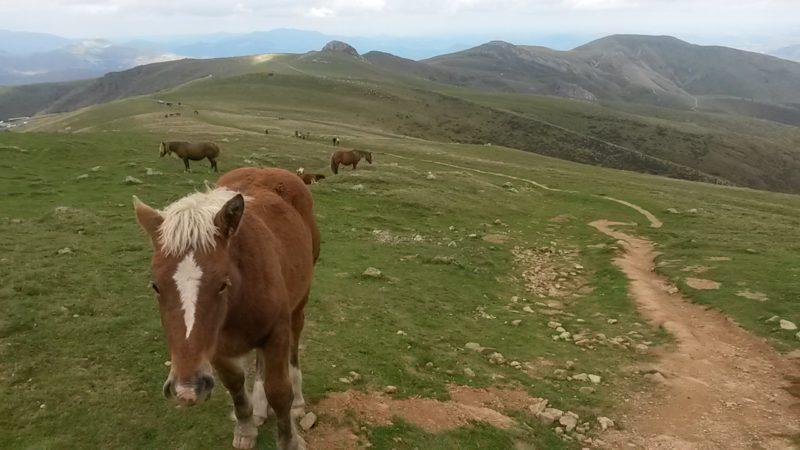 Camino - většinu času se stejně budete cítit jako v pohádce