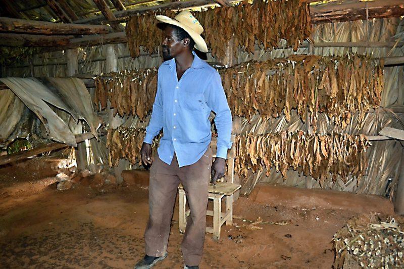 Sušárna tabákových listů
