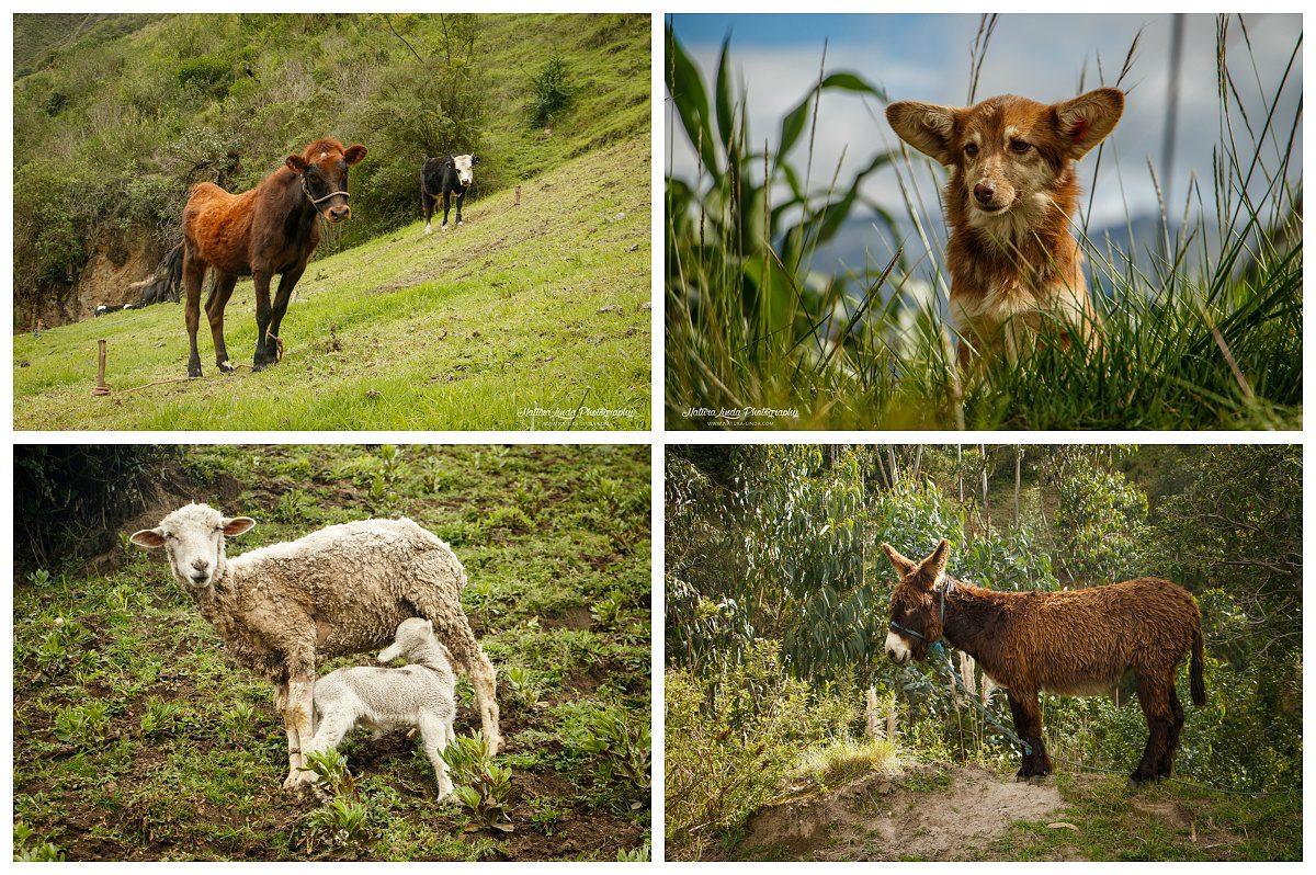 zvířena ekvádorského venkova :)