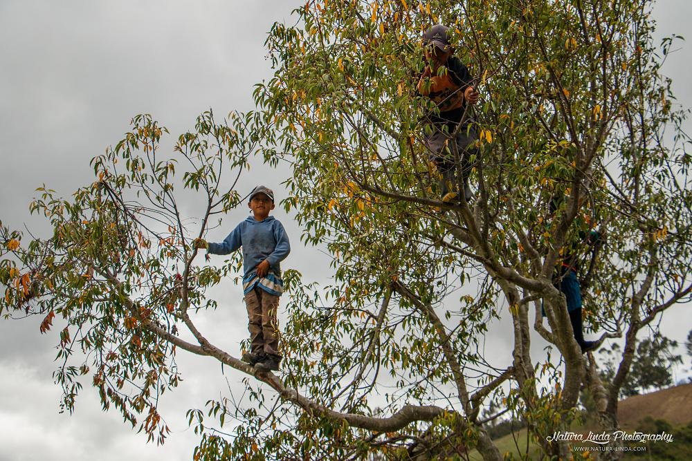 Kečuánské děti