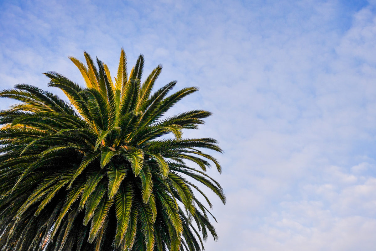 Palma na Sicílii