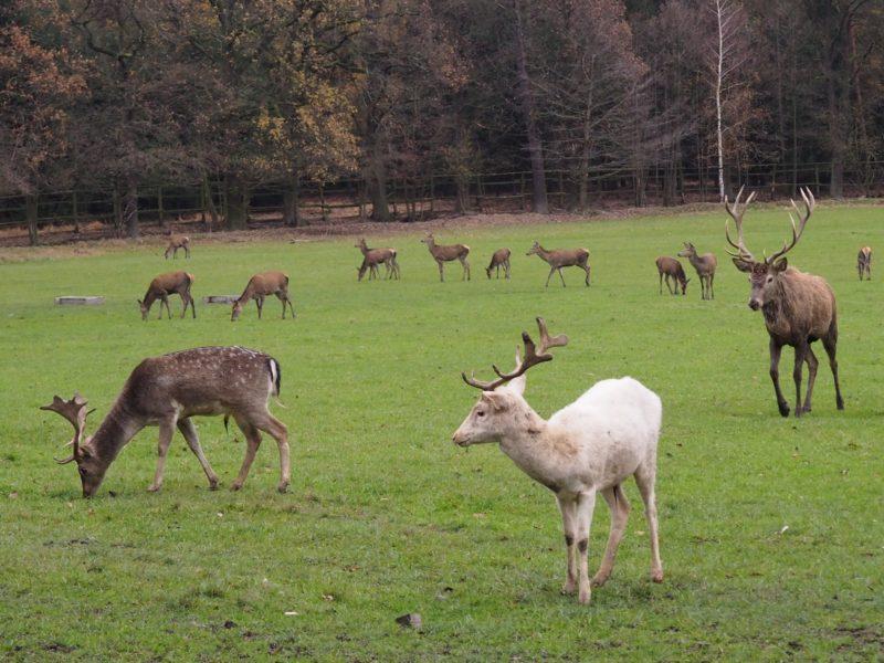 No řekněte, kdo se může pochlubit tím, že krmil bílého jelena?