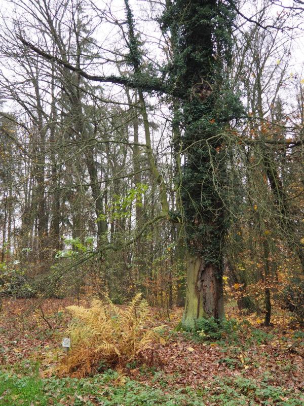 Mnohé stromy již hodně pamatují...