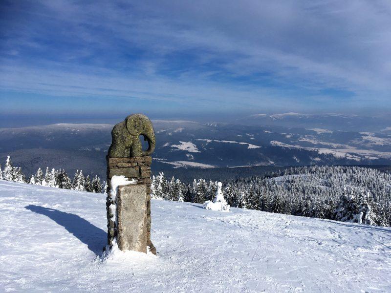 Slůně pod vrcholem Králického Sněžníku
