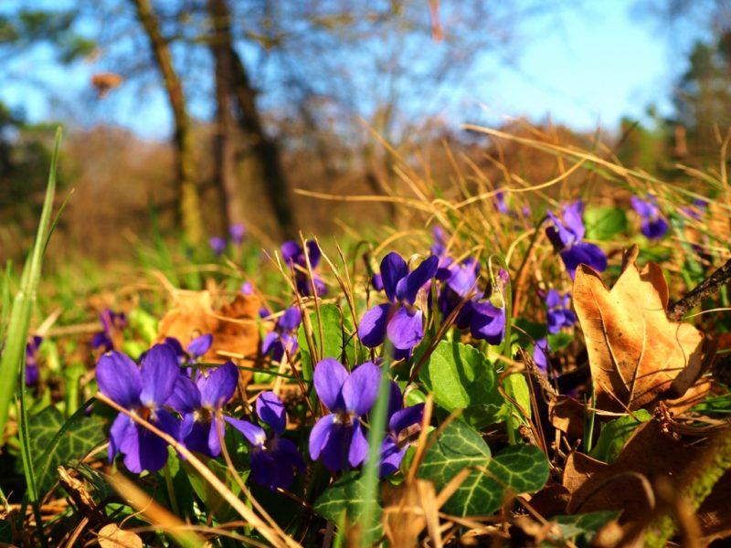 Jaro v Lednicko-valtickém areálu je plné barev.