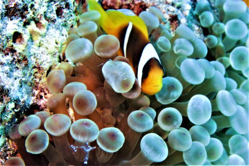 Potápění Egypt