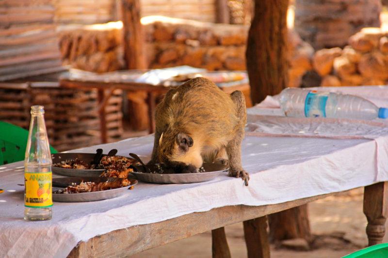 A když si nepohlídáte oběd, tak ho za vás dojí.