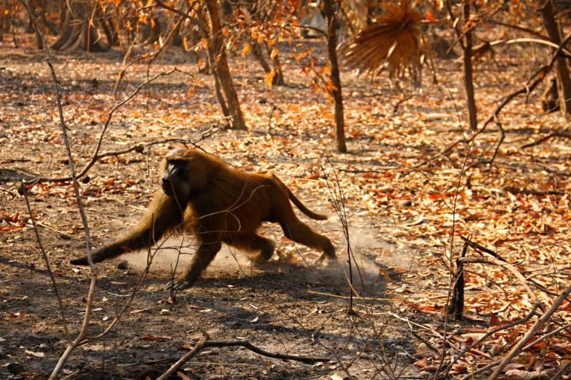 V parku narazíte velmi jednoduše na opice. Pohybují se i v blízkosti obydlí.