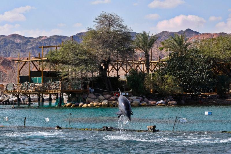 Delfíní útes