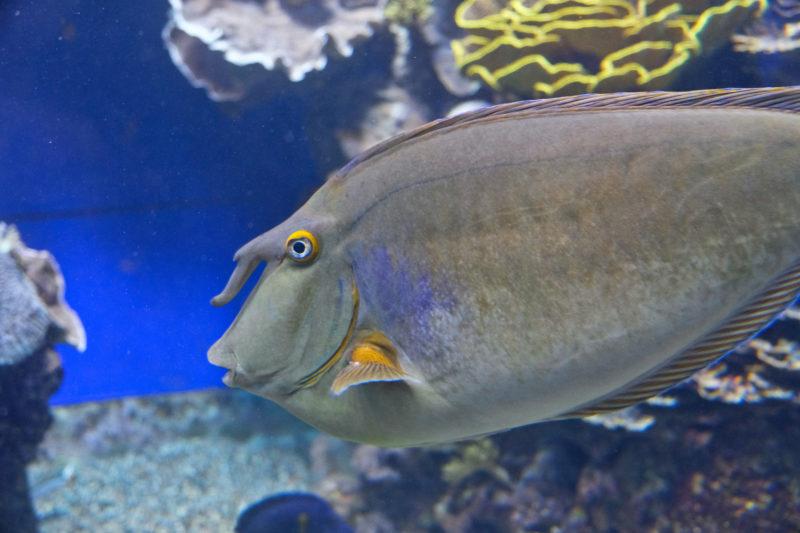 Obyvatel jednoho z akvárií v podmořském světě