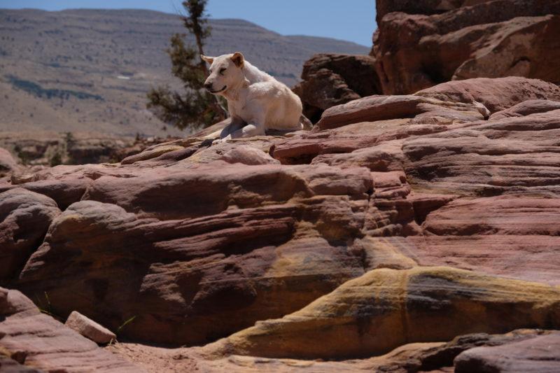 Pes na High Place of Sacrifice trail