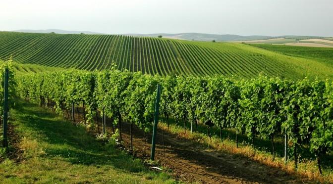 Vinice, Velké Bílovice, Jižní Morava